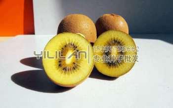 猕猴桃种子