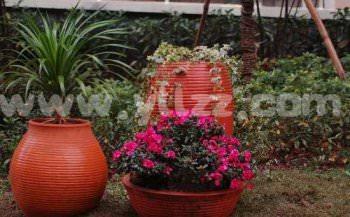盆花过冬为何要少浇水?