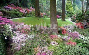 园林绿化中对地被植物的应用策略