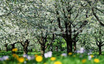 观赏果树的价值