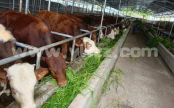 养殖种植牧草有什么好处?