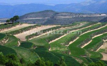 山区如何种植牧草?
