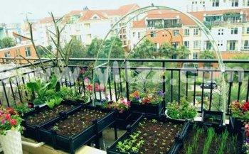 今年流行阳台蔬菜栽培,观赏食用两不误