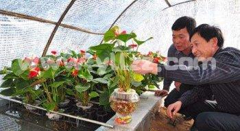 选购水栽花卉的技巧
