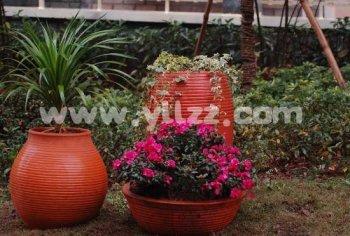 适合在酸性土地区种植的盆花有哪些?