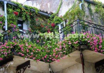 家庭阳台窗台如何使用花卉装饰美化?
