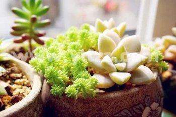 光照对花卉生长发育有什么影响?