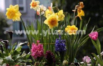 为啥对花卉植物进行遮阴?