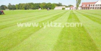 草坪修剪越勤越好吗?