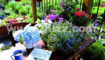 花卉植物都有哪些虫害?