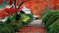 北京香山植物园